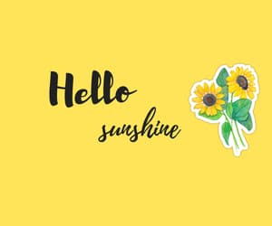 laptop, wallpapers, and sunflower image