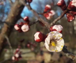 apricot, sunshine, and blossom image