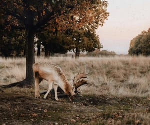 animals, beauty, and deer image