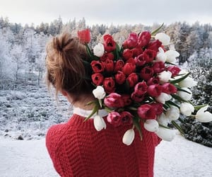 flowers, red, and snow image