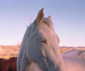 horse and white horse image