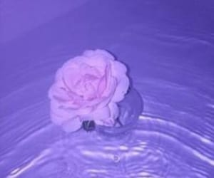 flowers, water, and rose image