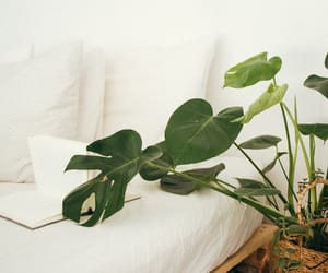 beautiful, cozy, and plant image