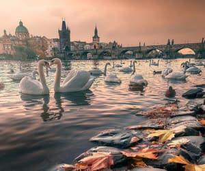 autumn, Swan, and animals image