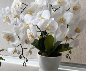 flowers and orchid image