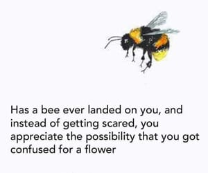 quotes, bee, and flower image