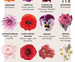 beautiful, お花, and flower image