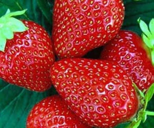 delicious, fruit, and FRUiTS image