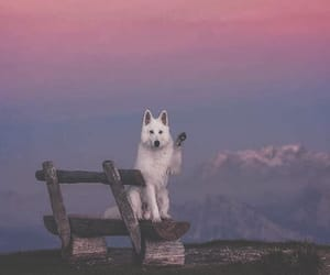 dog, mountain, and sunrise image