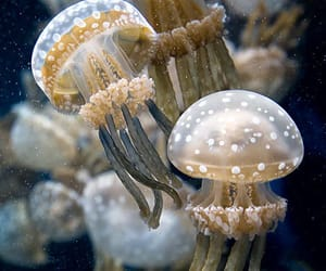 jellyfish, animal, and nature image