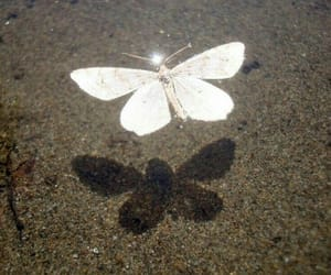 butterfly, shadow, and white image