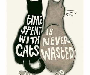 cats, illustration, and quote image