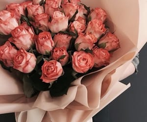 rose, aesthetic, and beautiful image