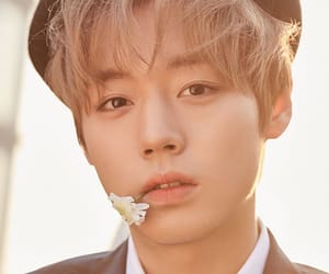 flower, minhyun, and wanna one image