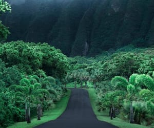 nature, travel, and green image