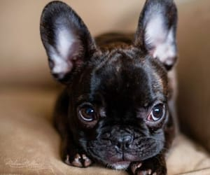 dogs, inspiration, and puppy image