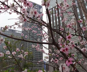 article, korea, and koreanculture image