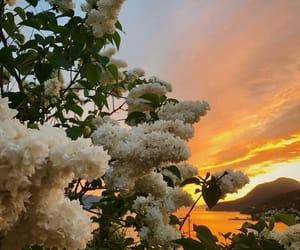 flowers, sunset, and aesthetic image