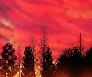 forest, light, and orange image