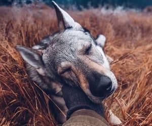 animal, deep, and werewolf image