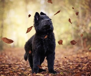 animals, autumn, and pets image