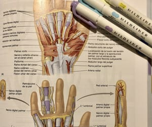 college, hand, and inspiration image