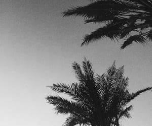 palms, beach, and black and white image
