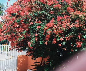 beautiful, flowers, and fotografia image