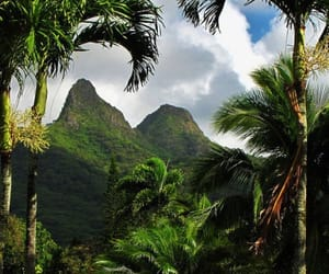 green, tropical, and beautiful image