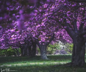 flowers, photo, and trees image