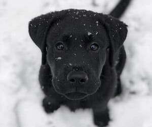 dog, black, and puppy image