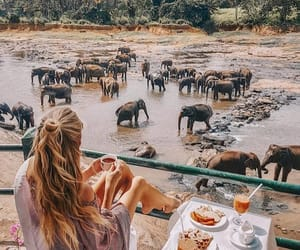 elephant, travel, and breakfast image