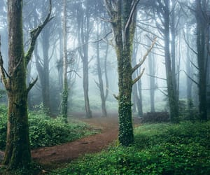 fog, photography, and forest image