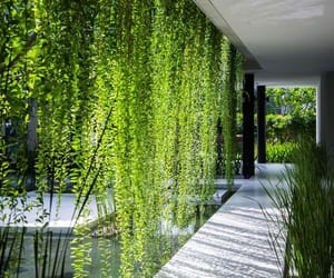 plants, green, and house image