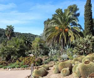 nature, palmtree, and spain image