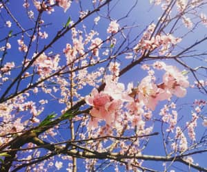 aesthetic, spring, and flower image