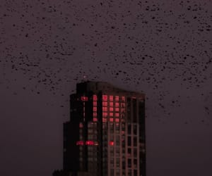 birds, black, and Darkness image