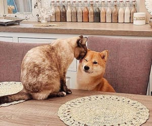 beige, cat, and cats image