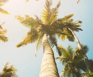 Aloha, explorer, and like image
