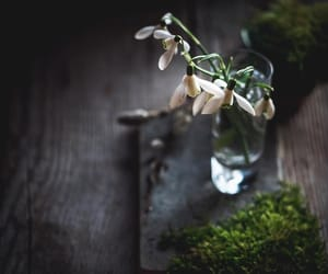 botany, flowers, and moss image