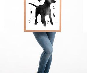 dog, home decor, and pit bull print image