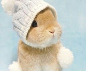 animals, cute, and bunny image