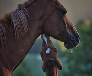 animals, farm, and filly image