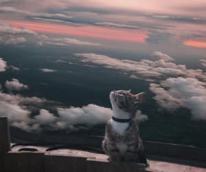 alternative, clouds, and animals image
