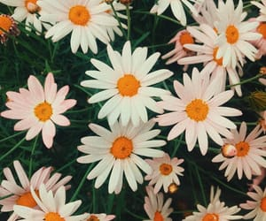 aesthetic, cool, and flowers image