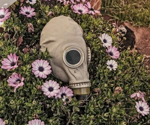 flowers and gas mask image