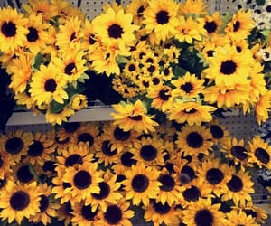 sunflowers and yellow image