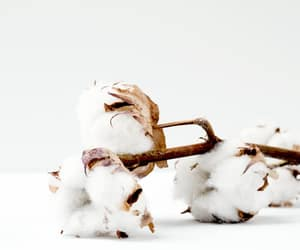 aesthetic, cotton, and white image