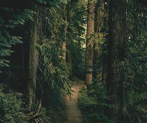 explore, nature, and path image