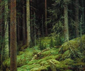 forest and moss image